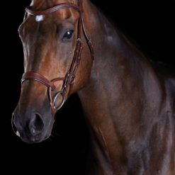 Collegiate ComFiTec Training Bridle in brown leather on a dark bay horse