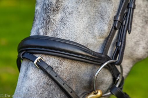 Collegiate Mono Crown Padded Raised Flash Bridle noseband detailing on a dapple gray horse
