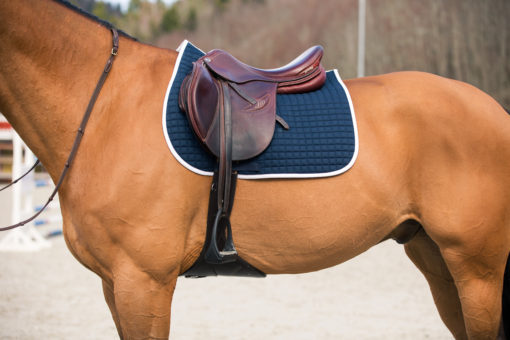 Horze River AP saddle pad, Peacock navy blue with white binding on a buckskin horse